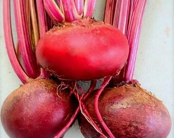 SALE! Early Wonder Heirloom Beet Seed Rare Grown to Organic Standards