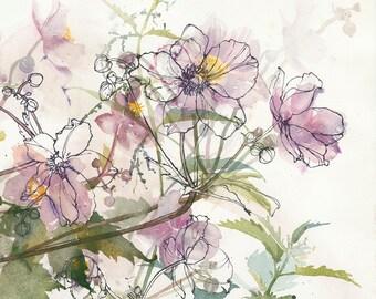 Anemones amongst flowering Nettles