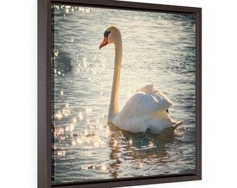 Wall Decor Wall Hanging Swan On Tranquil Lake Square Framed Premium Gallery Wrap Canvas