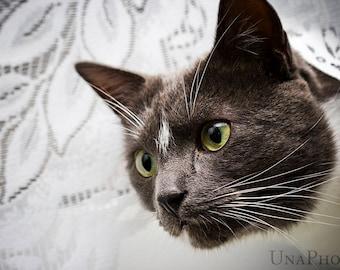 Black cat Postcard for Postcrossing - Fine Art Photograph