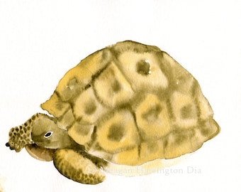 Turtle art - Desert Tortoise - LARGE 13x19 Fine Art Print - Southwest Painting - animal watercolor
