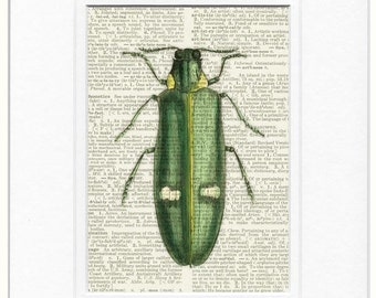 wood beetle dictionary page print