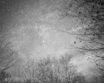 """star photography, astrophotography, trees and sky - 16x20, 11x14 or 8x10 photograph, """"Winter Light"""""""