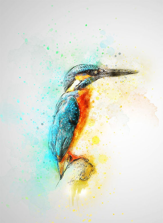 King fisher print water color art print