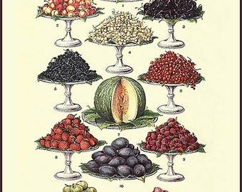 Fruit Poster - Farmhouse art ~ Kitchen art ~ fruit chart ~ vintage kitchen art ~ Farmhouse Kitchen Decor ~ food poster - Farm house