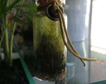 6 months old mini moss terrarium