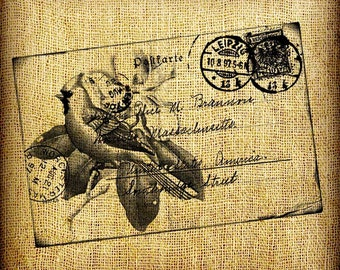 Cardinal and German Germany Bird Postcard Vintage Digital Image Transfer Download 300 dpi for Pillows Totes Bags Napkins Towels