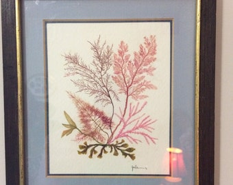Seaweed Art by Artist Johanna Luckie