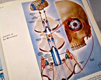 Medical Illustrations Book Vintage Medical Book