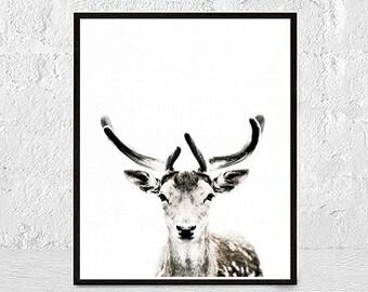 Wall Art Print Deer Print Deer Antlers Stag Print Animal Print nursery animal wall art