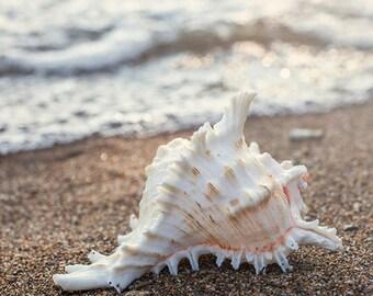 Shell Print, Seashell Photography, Seashell Photo, Beach Photography, Shell Photo, Ocean Decor, Coastal Wall Decor, Nautical Home Decor
