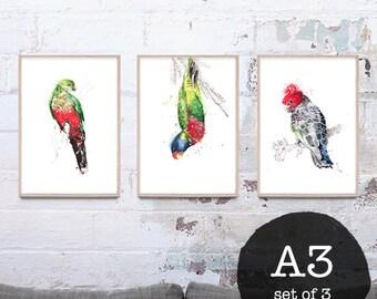 NEW set of 3 (A3) Australian Bird art prints, giclee prints, Trending art