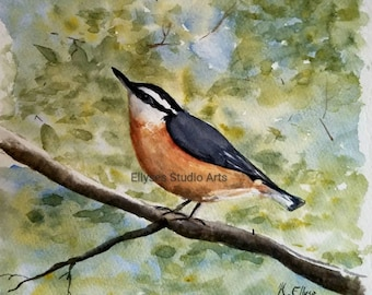 Watercolor print of a Nuthatch bird