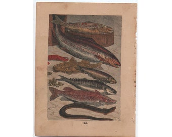 c.1882 FISH - RARE ANTIQUE lithograph -  original antique print - Buffon natural history animal scene mini print - trout - salmon - herring