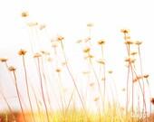 Seaside Flora, Red Yellow, Golden, Landscape Photo, Seaside Print, Seashore Photo, Dry Flowers Print, Flower Art Print - Summer Breeze