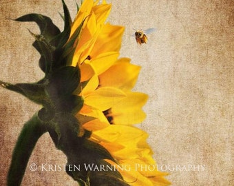Sunflowers, Textured Sunflower, Sunflower Pictures, Bees, Nature Photography, Yellow Flowers, Nature