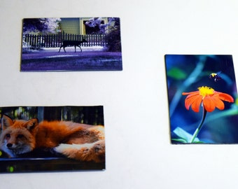 Magnets: 2 x 3 inch Red Fox, Purple Deer, & Anticipation of Pollination Photo (Bee) - kitchen, kids room, college dorm, home decor, under 5