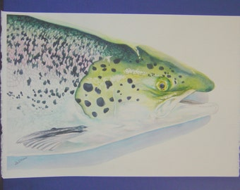 """Unframed Original Watercolor Painting of a Fish (18.5"""" x 14"""")"""
