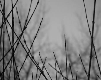 Bare - Black and White Photograph - Winter Branches - Dark and Moody Nature Art - 4x6, 5x7, 8x10, 11x14, 16x20