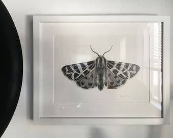 """Framed """"Kintsugi"""" Original Graphite / Pencil Moth Drawing w/ 24kt Gold Leaf"""