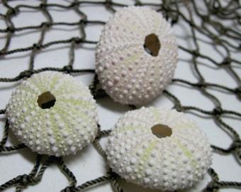 Beach Seashells Mini Sea Urchins Light greenish sea urchins 803