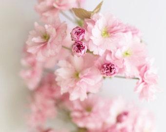 Floral Photography, Cherry Blossoms Fine Art Photograph, Romantic Decor, Large Wall Decor