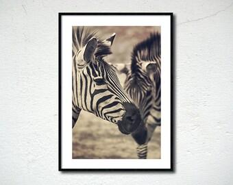 Zebra photography