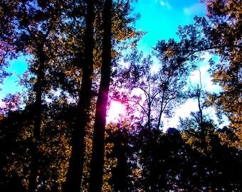 Rainbow Shadows, Sky Through Trees, Beautiful Sunrise, Nature Walk, Dawn, In Woods, Clouds , Original Print, Poster, Wall Art, Photograph