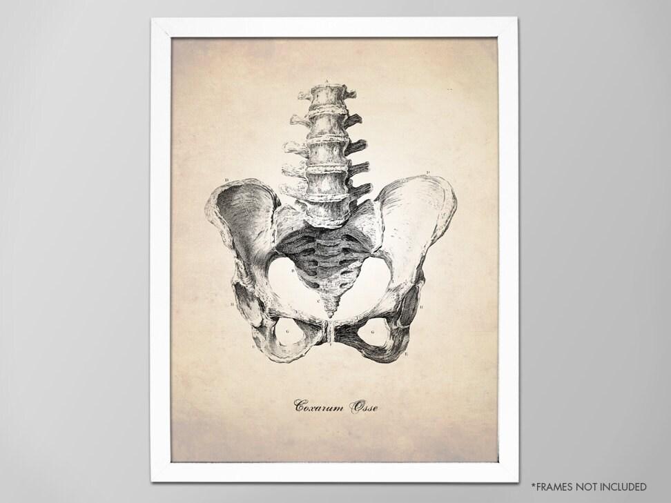 Menschliche Beckenknochen menschlichen Anatomie Kunstdruck