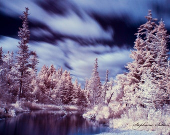 Infrared, spruce forest, stream, landscape, photography, wall art, winter, autumn, nature