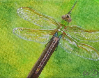 Dragonfly #8 - Common Green Darner