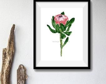 Protea flower art print 2, Protea watercolor print, Flower art print, Pink Protea blossom art, Protea branch print, floral art, plants art