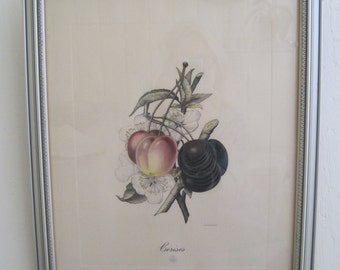 Hand Colored Lithograph by Belgian Artist G. Severeyns Cerises Cherries Cherry