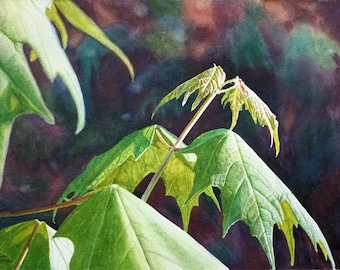 Leaves Art Watercolor Painting Print by Cathy Hillegas, 12x16, maple leaf art, nature art, watercolor print, green, yellow, orange, brown