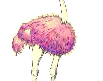 "Pink Ostrich art print of an original drawing available 5x7"" or 8x10"""
