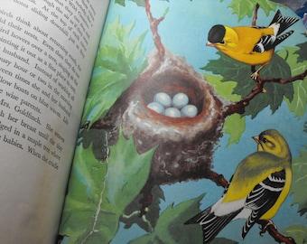 Vintage Children's Bird Book, Prints For Bedroom Or Nursery Decor