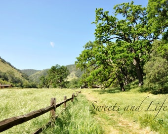 A little fence and a lot of nature; Landscape; California; Southern California; Nature; Natural Landscapes; Green Photography;