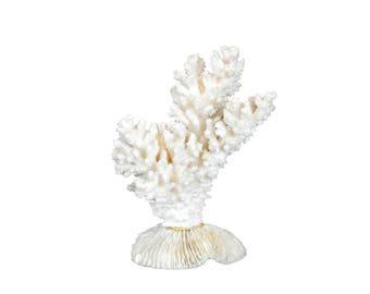 Coral vintage white