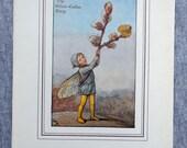 Willow Catkin Flower Fair...