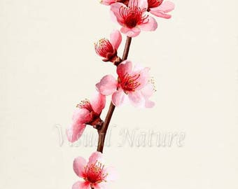 Peach Flower Art Print, Botanical Art Print, Flower Wall Art, Flower Print, Floral Print, pink flower print