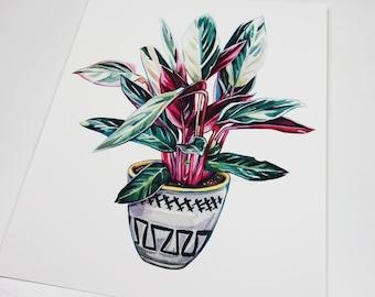 Stromanthe Tricolor Houseplant Print