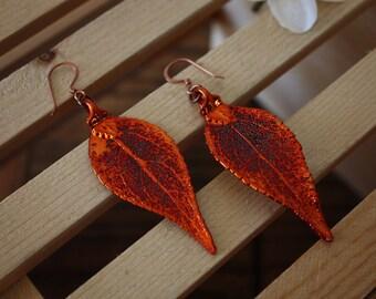 Medium Copper Leaf Earrings, Evergreen Leaf, Real Leaf Earrings, Copper, Earrings, Nature, LEP7