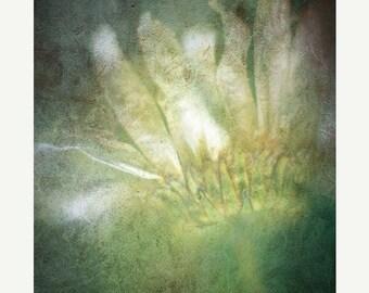 20 Percent Off Sale nature photography daisy fine art photography print green ghostly home decor nursery decor