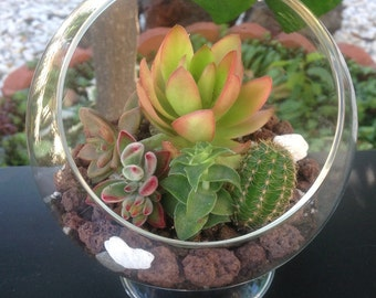 "Succulents Terrarium Kit 5"" Glass Globe with 3"" Pedestal DIY"