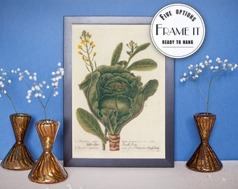 "Vintage illustration of cabbage - framed fine art print, botanical art, 8""x10"" ; 11""x14"", FREE SHIPPING  006"