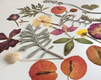Mediteranean mix,real pressed flowers