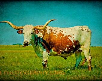 Western Photography Southwestern Home Decor Texas Longhorn Fine Art Prints