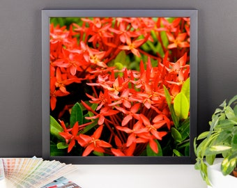 Red Flower Framed poster