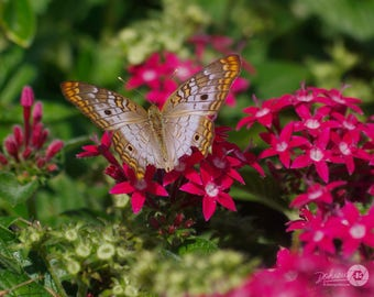 """Four (4) Nature / Butterfly Photo Note Cards (4.25"""" x 5.5""""), blank inside with envelopes"""