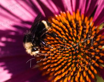 Bee, Flower photography, Macro photography, wedding gift, honey bee photo, fine art, SELECT Any SIZE, nature photograph, LOW Shipping cost